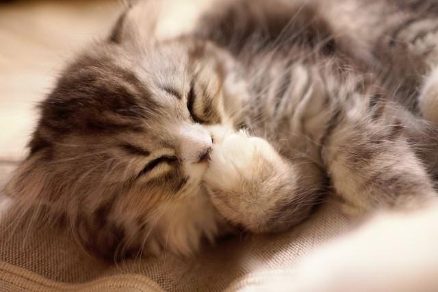 通販で猫の健康を考えたキャットフードをお探しなら