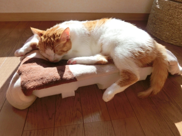 猫の夏バテを防ごう~食事での対策方法~